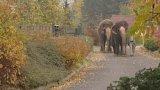 Příběhy ze zoo: Slon indický