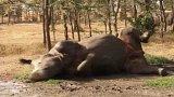Keňa: nosorožciI