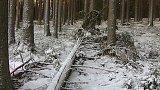 Bezzásahová zóna v šumavském NP se téměř zdvojnásobí