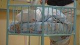 Jednodenního novorozence našli v pondělí večer zaměstnanci na chodbě jihlavské nemocnice