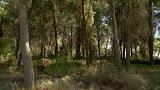 Zalesňování Izraele