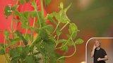 Zahrádka aktuálně - Zuzana Pencová - exotické bylinky