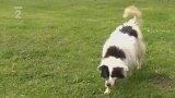 Nabídka psů: Městský útulek pro psy Mariánské Lázně