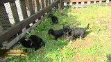 Na plotě záchranné stanice našli tašku s pěti štěňaty
