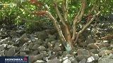 Sever Indie sčítá škody po povodních
