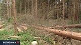 Restituce: církve a Lesy ČR ve sporu o vytěžené dřevo
