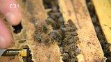 Pražské včely