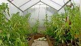 Zazimování zahrady – zeleninové záhony, ovocné stromy, trávník