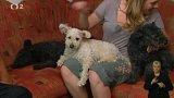 Pumi – hravý pes