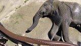 Vedro v africké zoo