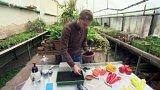 Výsev paprik