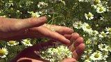 Jak sbírat bylinky