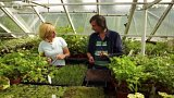 Jarní výsev bylinek