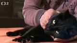 Nabídka koček z Jaroměře