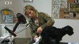 Výprava do psího salonu