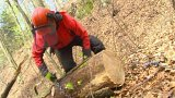 V Českém ráji kácí a řežou nebezpečné stromy