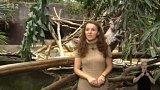 Ochrana želv v Indonésii