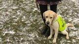 Středisko výcviku vodicích psů Jinonice
