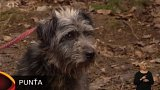 Nabídka psů z Plzně