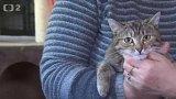 Nabídka koček z Lovosic