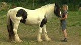 Než si osedlám koně