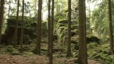 Park Čeřínek