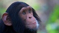 My, chytří primáti