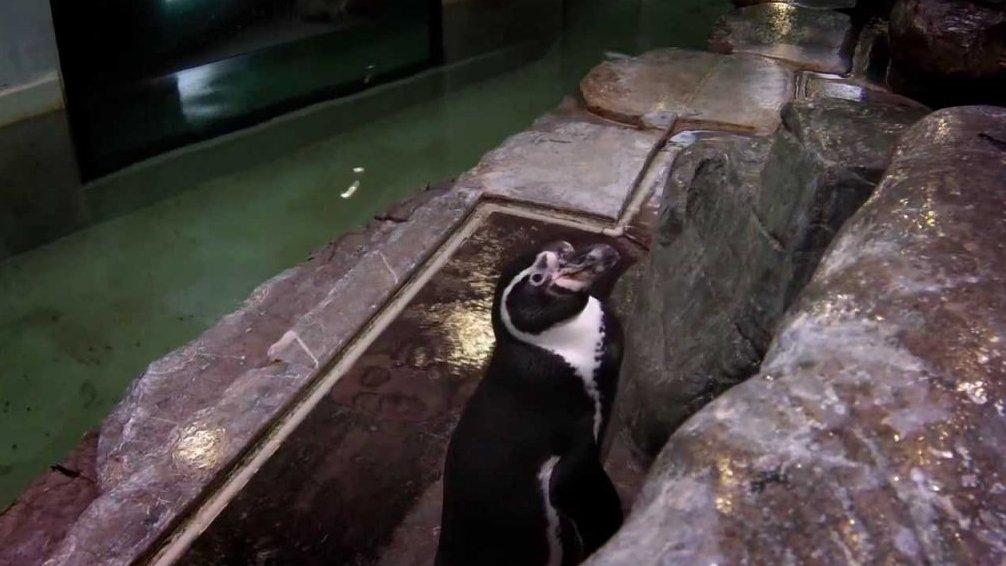 Skrytá kamera: Vladimír Kořen vypráví pohádku tučňákům