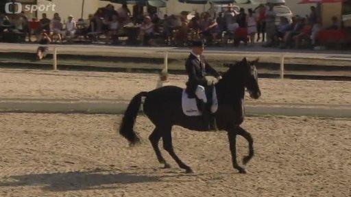 Koně na Žofíně
