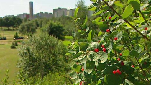 Nedej se!: Rozprodávání životního prostředí na Jižním Městě