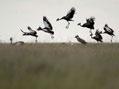Kouzlo Afriky � pt�ci
