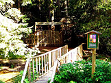 Mostek přes Tisový potok před vchodem do pralesa (foto: Mgr. Zdeněk Kubeš, zdroj: Wikimedia)