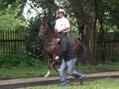 Kr�lovstv� za kon�
