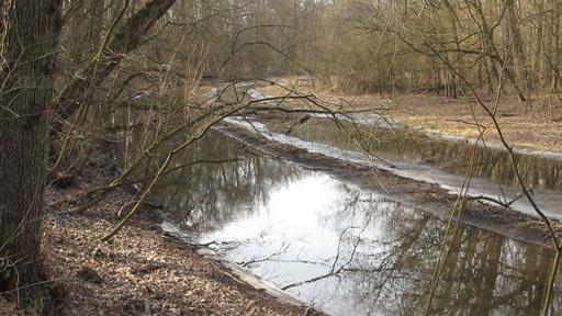 Mizející místa domova: Prales u Poděbrad