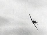 Kv�ten 1944