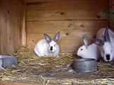 Smrt krásných králíků