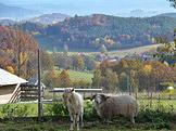 Malá farma Štěňata a tele