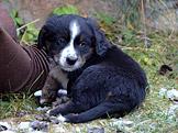 Očkované štěně