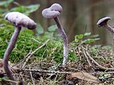 Na houby – Nejen o václavkách