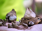Na houby Lišky, kuřátka a břichatky