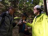 Na houby – Li�ky, ku��tka a b�ichatky