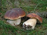 Na houby