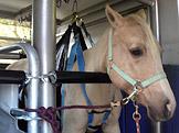 Koňská záchranka
