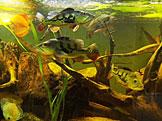 Um založit akvárium