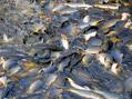 Jak na ryby s Rudou Hrušínským