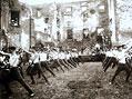 Cvičení Sokola na hradním nádvoří hradu/zříceniny Lipnice nad Sázavou před rokem 1913