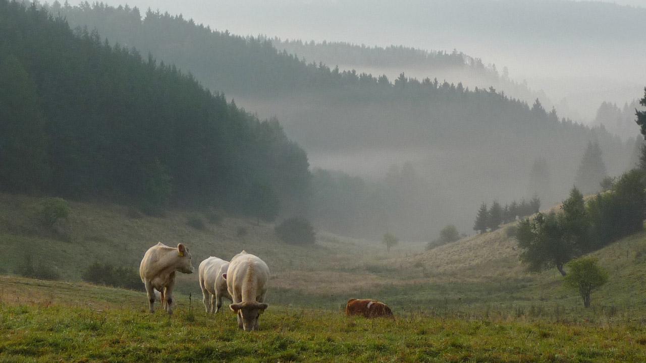 Klenoty naší krajiny: Slavkovský les