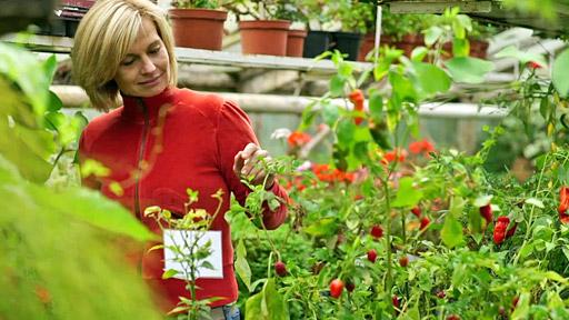 Kouzelné bylinky: Domácí lékař čili chilli