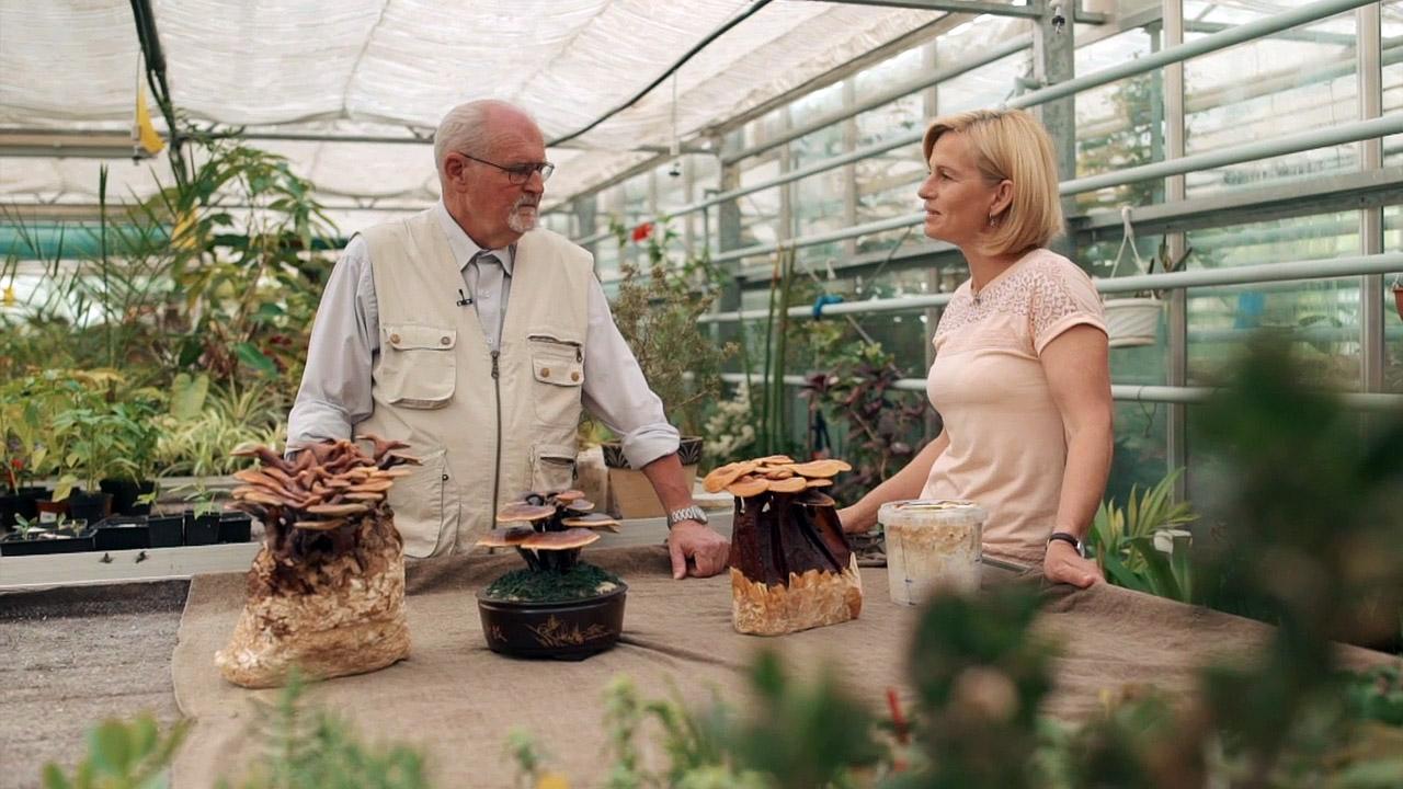 Kouzelné bylinky: Léčivé houby