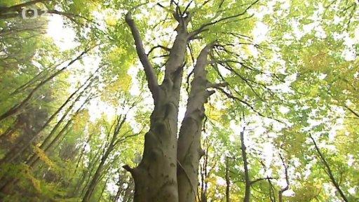 Občanské noviny: Jak se sází Nový prales
